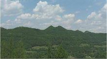 1998年建成占地2300余亩的化凤山森林公园.图片